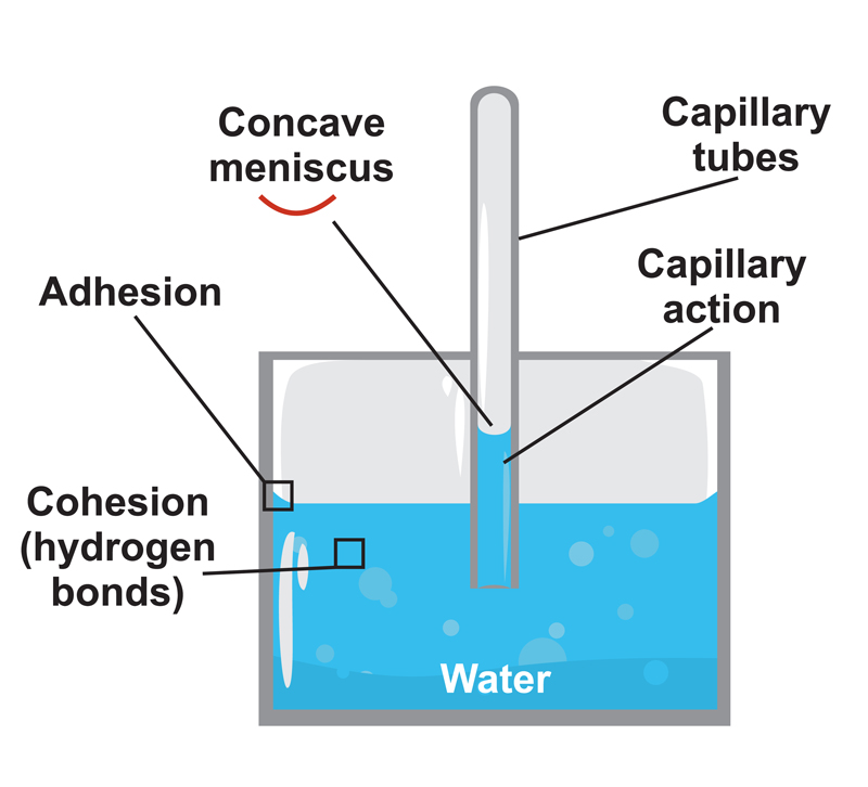 An example of capillary action in a glass of water